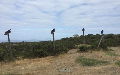 30 Riesenvögel ( siehe Hintergrund)