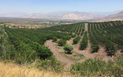 Chile wird fruchtbar