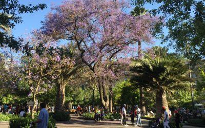 Es ist Frühling in Chile