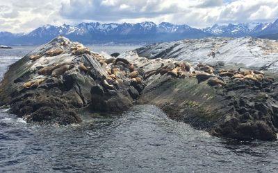 Bei den Seelöwen