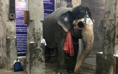 Der TempElelefant gab mir einen Kuss auf die Stirn