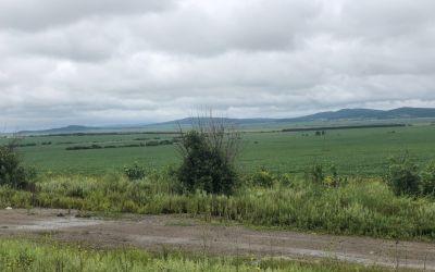 Soya, Mais, Korn - riesige Flächen