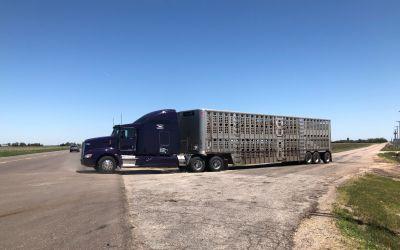 Ein ViehTransporter unter Tausend