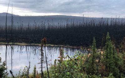 Neulich abgebrannte Wälder