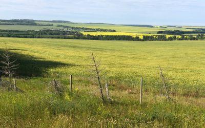 Plötzlich viel Farmland