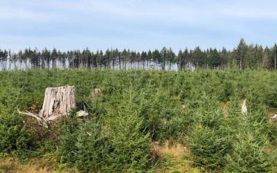 Drei Generationen Wald