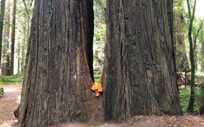 Bäume mit Windjacke