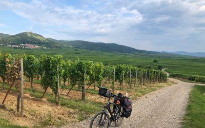 Der Weinbau