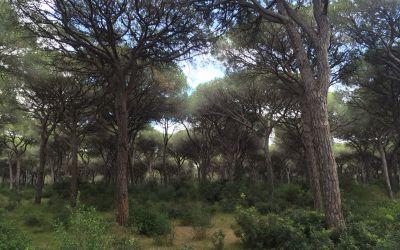 Welch schöne Wälder