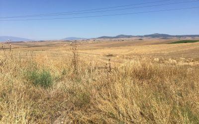Riesige Kornlandschaften sind nicht fotogen