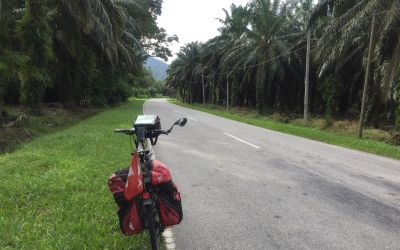 Endlose Palmölkulturen