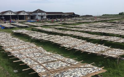 FischTrocknung
