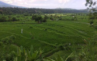 Wunderschöner Osten Balis
