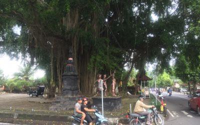 Welch phantastischer Baum