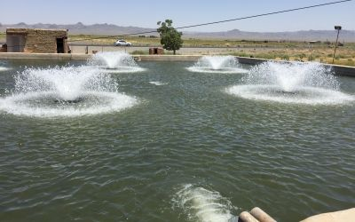 FischZucht in der Wüste